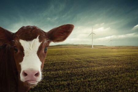 Gospodarka o ujemnym bilansie dwutlenku węgla